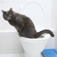 Clever domestic cat in a toilet